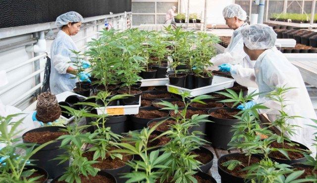 Puntos a destacar del Reglamento de la Ley General de Salud en Materia de Control Sanitario para la producción, investigación y uso medicinal de la Cannabis y sus derivados farmacológicos